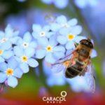 ¿Qué hacer si lo pica una abeja o una avispa?
